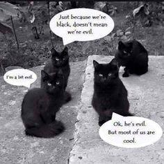goth cats.jpg