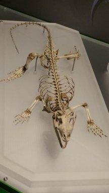 lizard bones